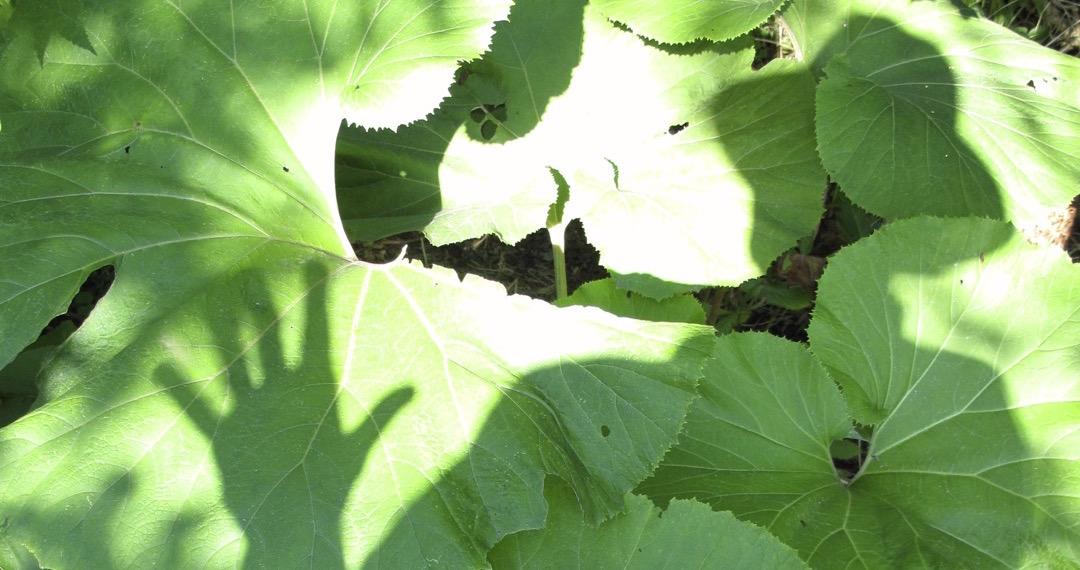 Le jardinier invisible
