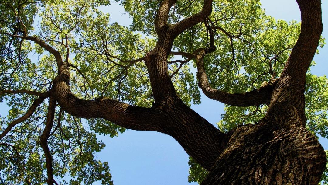 Les arbres de Boucar Diouf