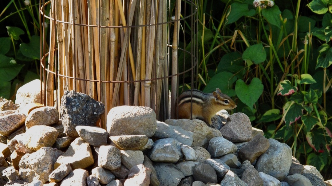 Installations et jardins